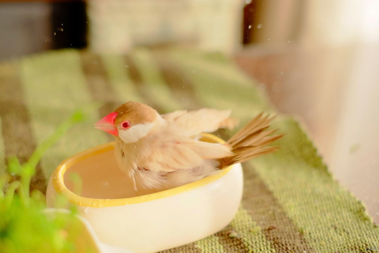 クラシカルなお風呂