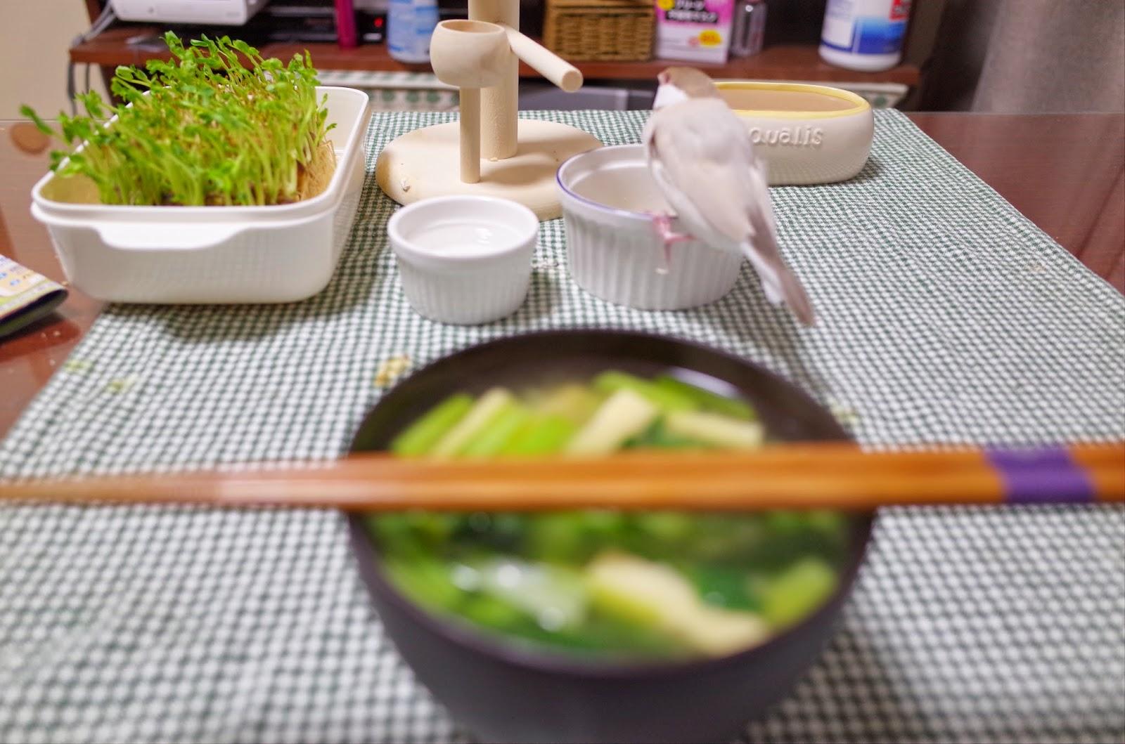 今日は一緒に夕飯を食べました