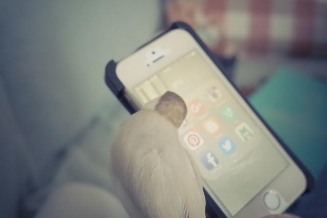 ぼくちんのiPhoneだ!
