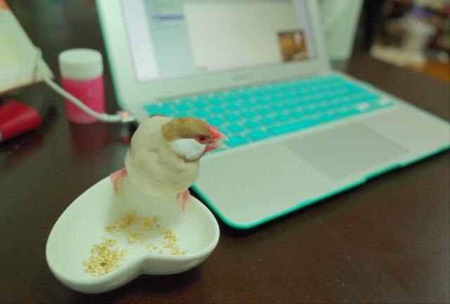 MacBook Air ラブ